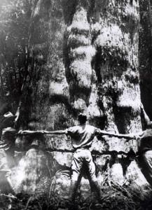 """""""Heart Cypress – The Wood Eternal"""", the Southern Cypress Manufacturer's Assn, 1936"""